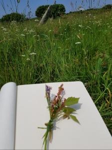 notebook-wildflowers